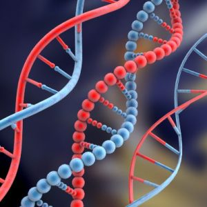 DNA database impact on human rights