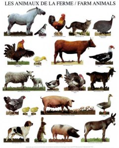 How to argue right to life for farm animals?