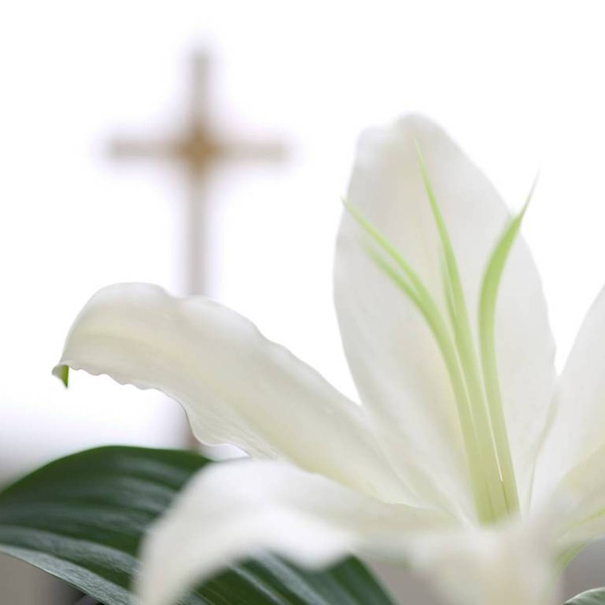 Printable Easter Lily Picture
