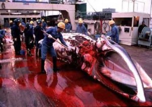 japan-whaling-e1270007253119